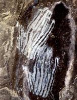 Carmel Rock Art